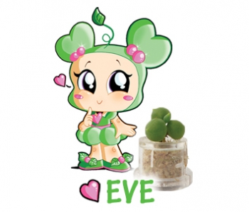 Eve - Dolcezza